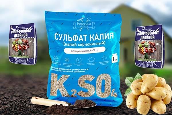 Удобрение для картофеля: какое лучше при посадке использовать