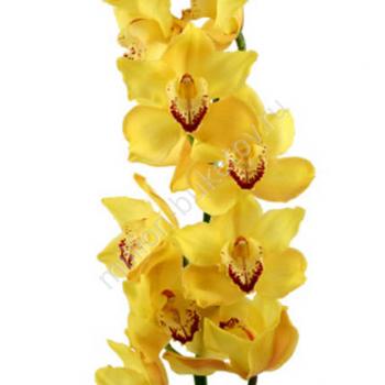 Каких цветов бывают орхидеи?