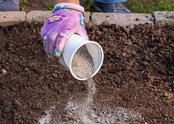 Чем подкормить пионы в период бутонизации и осенью? - rus-womens