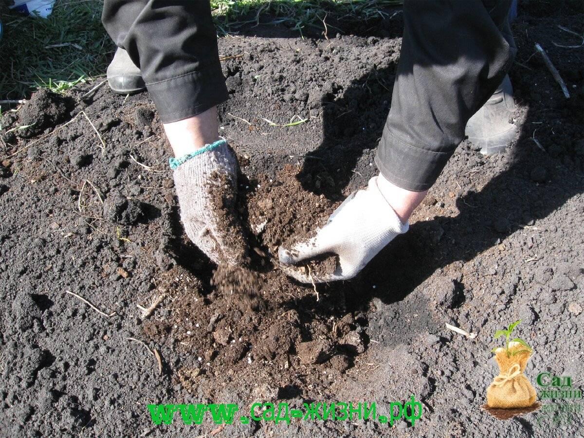 Удобрения для картофеля при посадке и осенью: виды, как вносить