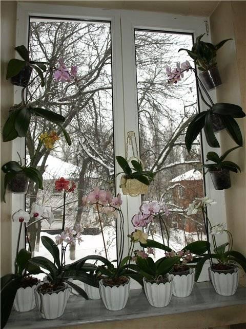 Как ухаживать за орхидеей в домашних условиях: инструкция для начинающих - sadovnikam.ru