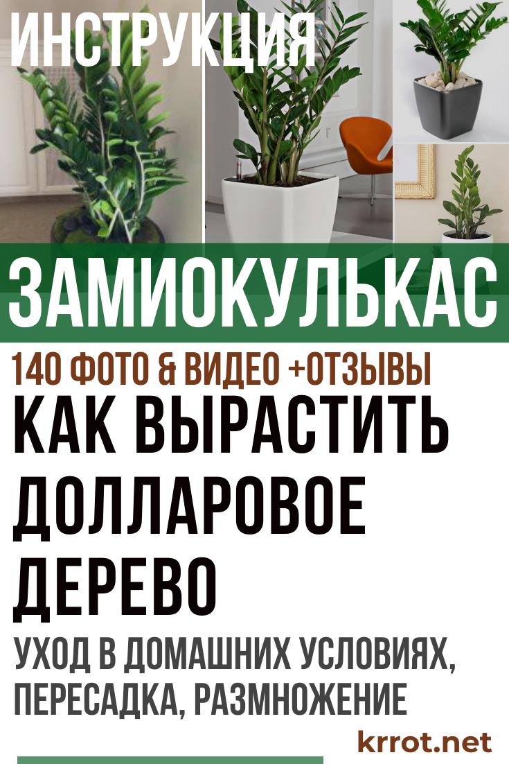 Правильный уход за долларовым деревом в домашних условиях: как цветет zamioculcas