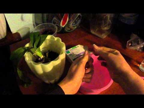 Витамины для орхидей: состав коктейля и применение группы в в домашних условиях, частота удобрения, показания и противопоказания русский фермер