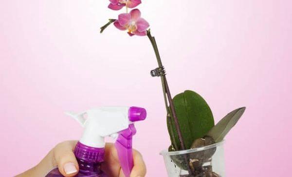 Витаминный коктейль для орхидей — как применить