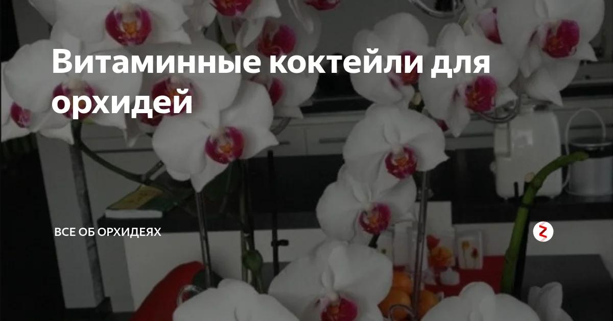 Как подкормить орхидею? выбор лучшего удобрения для фаленопсиса