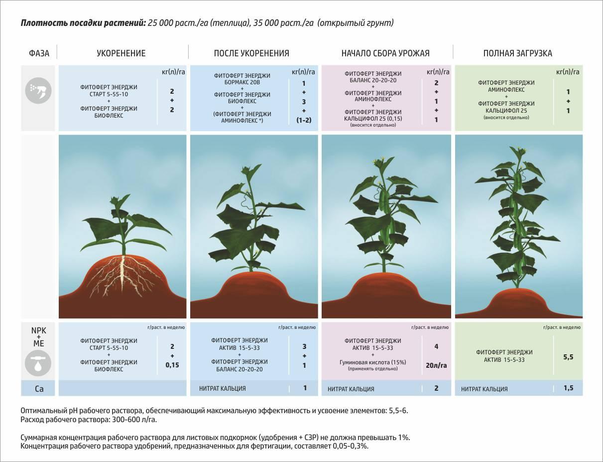 Какие минеральные удобрения нужны помидорам при посадке, что класть в лунку из органики? практические рекомендации