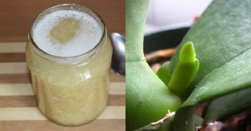 Подкормка орхидей чесноком с янтарной кислотой | садоёж