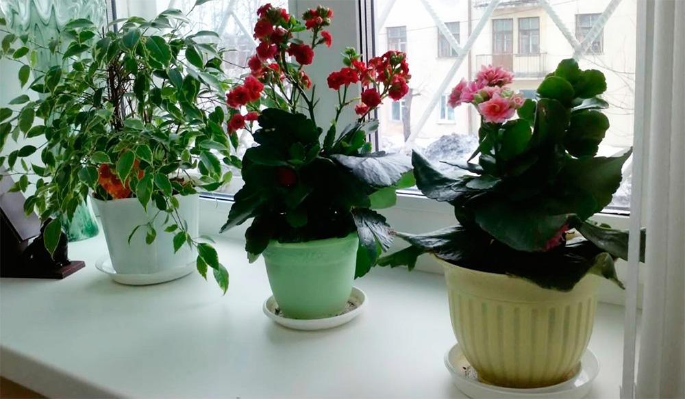 Как правильно использовать янтарную кислоту для подкормки орхидей?