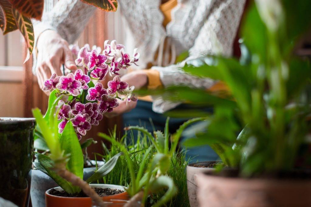 Орхидея фаленопсис – тонкости ухода в домашних условиях после магазина