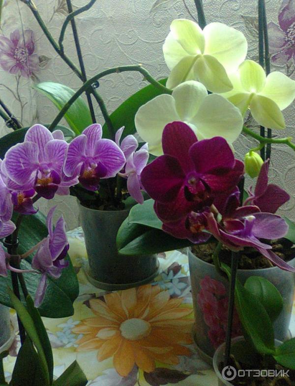 Витаминный коктейль для орхидей как сделать