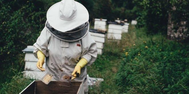 Пасека и пчелы