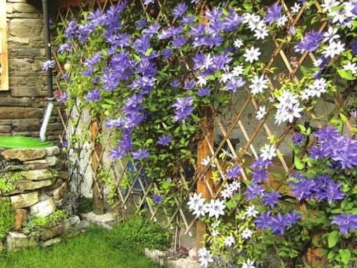 садовые решетки для сада