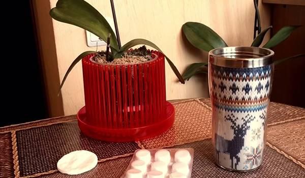 Как разводить янтарную кислоту для орхидей в таблетках для полива: правильная дозировка и пропорции того, как сделать раствор для подкормки