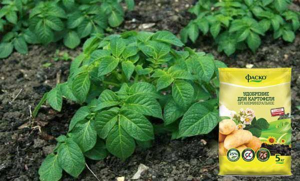 Удобрение картофеля при посадке в лунку: какие лучше вносить весной и осенью в почву