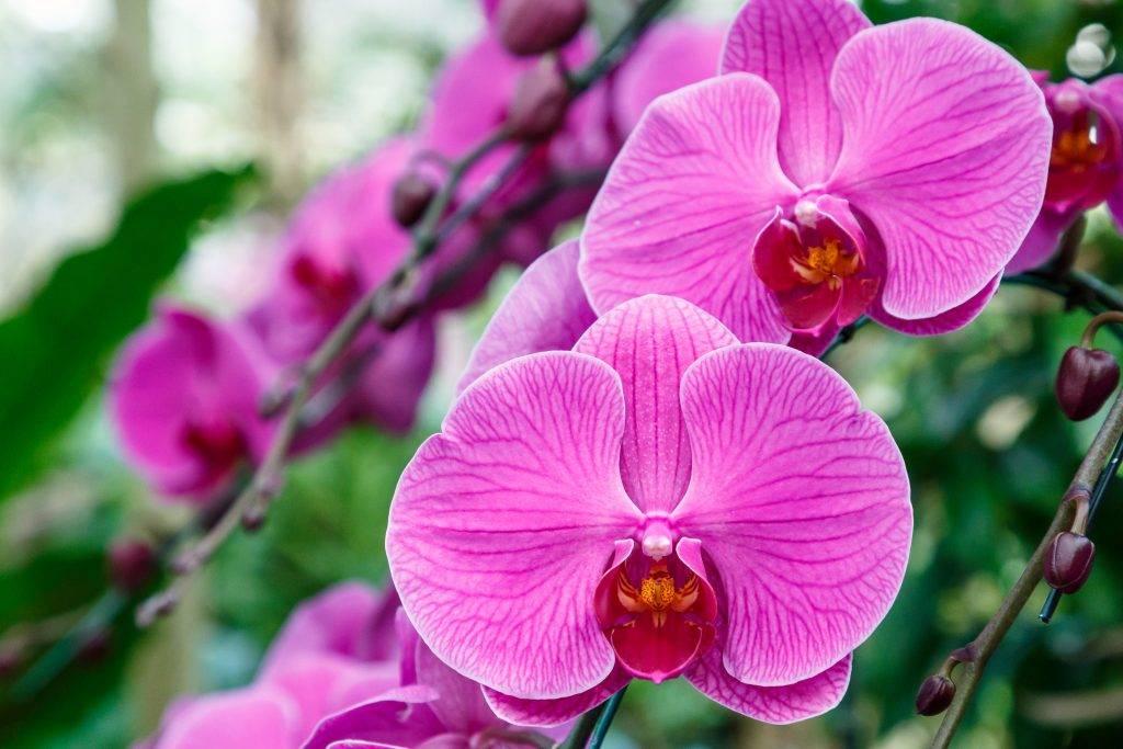 Почему желтеют листья у орхидеи фаленопсис - причины пожелтения листвы и методы помощи растению