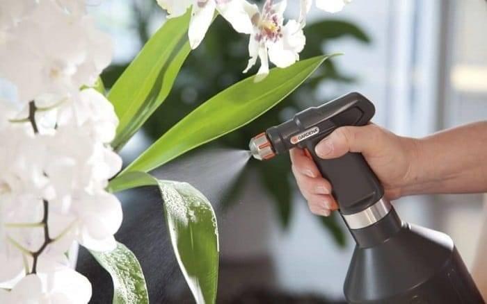 Как применять янтарную кислоту: советы для начинающих цветоводов