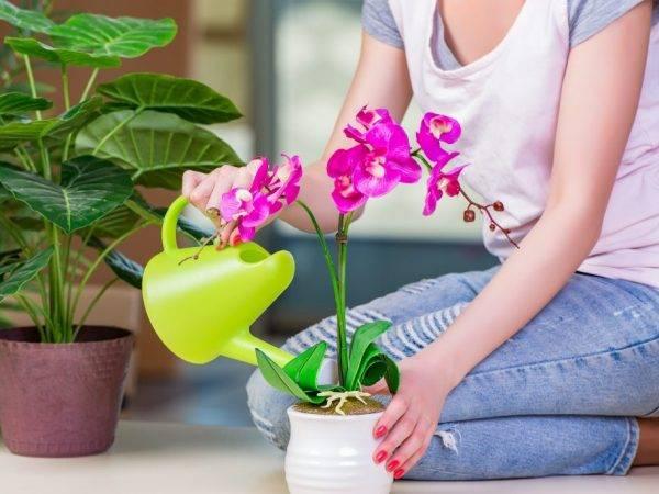 Актара для орхидей: как применять против мучнистого червеца, инструкция по обработке