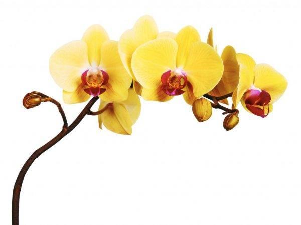 Красные орхидеи: сорта и фото, а также бывают ли эти прекрасные цветы в природе