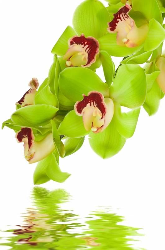 Интересные факты о том, как выглядят орхидеи в природе