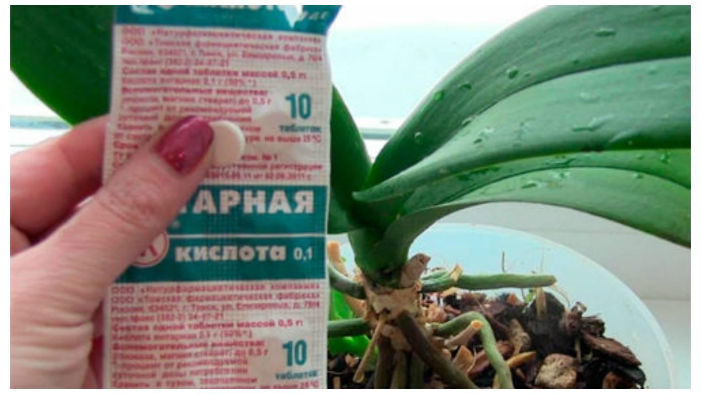 Янтарная кислота для орхидеи фаленопсис: инструкции и видео, как применять это удобрение
