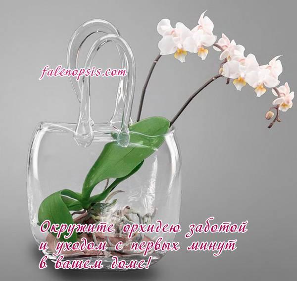 Орхидея фаленопсис отцвела, что делать, и как ухаживать за заморским чудом?