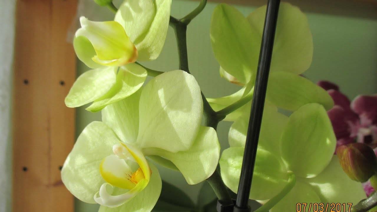 Лесная орхидея: описание и фото цветков ленинградской и подмосковной области, виды северных растений, где растёт дремлик болотный и венерин башмачок