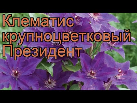 Три группы обрезки клематисов русский фермер