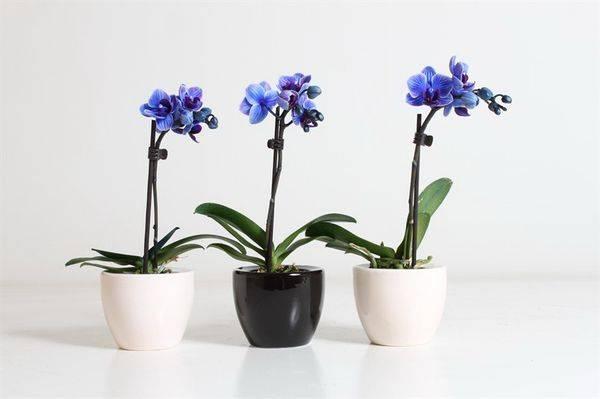 Полноценные посадка и уход за орхидеей в домашних условиях