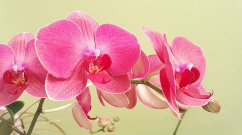 Полезна ли подкормка орхидей чесночной водой? состав, рецепты, показания и противопоказания