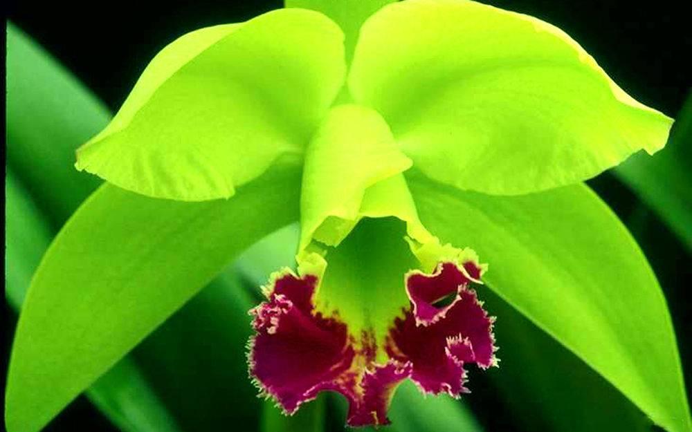 Как выглядит орхидея в горшке: фото, особенности и виды с названиями