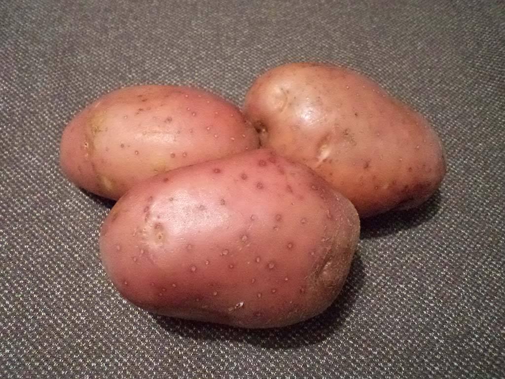 Сорта картофеля для волго-вятского региона: список