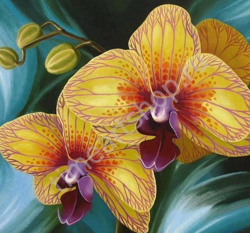 Красота и особенности желтой орхидеи фаленопсис. фото растения
