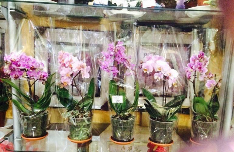 Орхидея отцвела: что делать со стрелкой, как ухаживать дальше