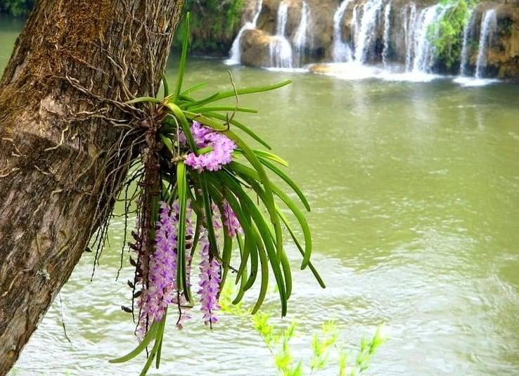 У орхидеи сохнут листья по краям или только кончики, но корни зеленые: что делать?