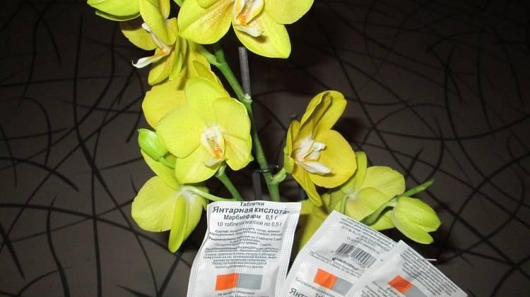 Реанимация орхидеи янтарной кислотой: как правильно приготовить раствор и обработать растение?