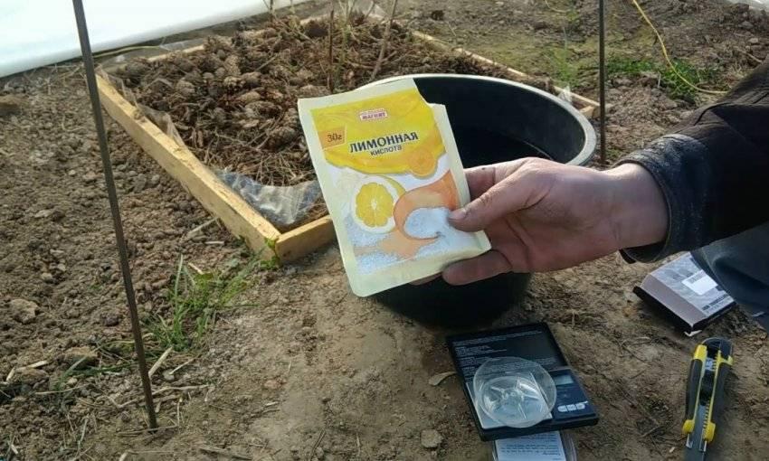 Как правильно подкислить почву для гортензии?