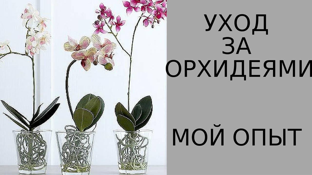 Как ухаживать за орхидеей в домашних условиях: инструкция для начинающих