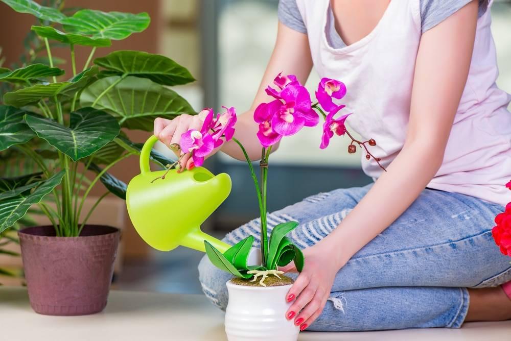 Как приготовить и применять витаминный коктейль для орхидей