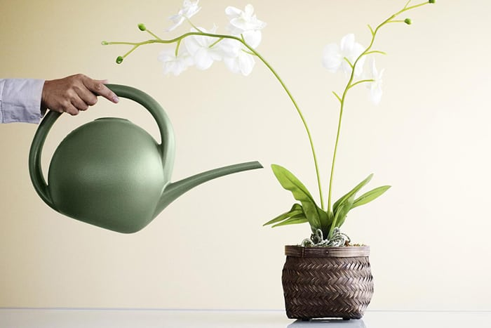 Почему у орхидеи вянут листья и мягкие