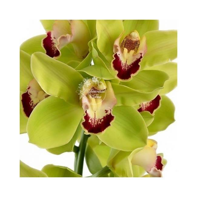 Самые красивые орхидеи в мире. больше, чем просто цветы (45 фото)