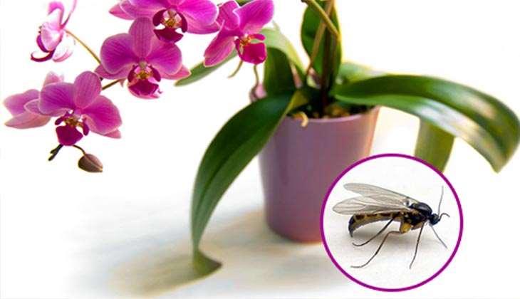 Вредители орхидей: какие бывают, способы борьбы с ними, фото