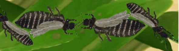 Вредители орхидей фаленопсис и их лечение: фото разных видов паразитов, их особенности и методы борьбы с этими насекомыми selo.guru — интернет портал о сельском хозяйстве