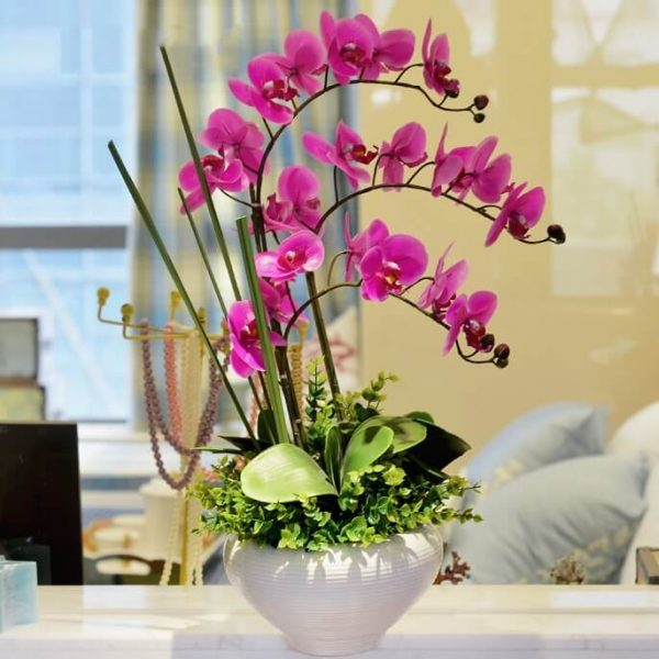 Уход за фаленопсисом в домашних условиях после покупки в магазине: полив, как выбрать - самая свежая информация и видео