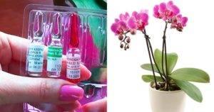 Орхидеи в восторге от витаминного коктейля для корней