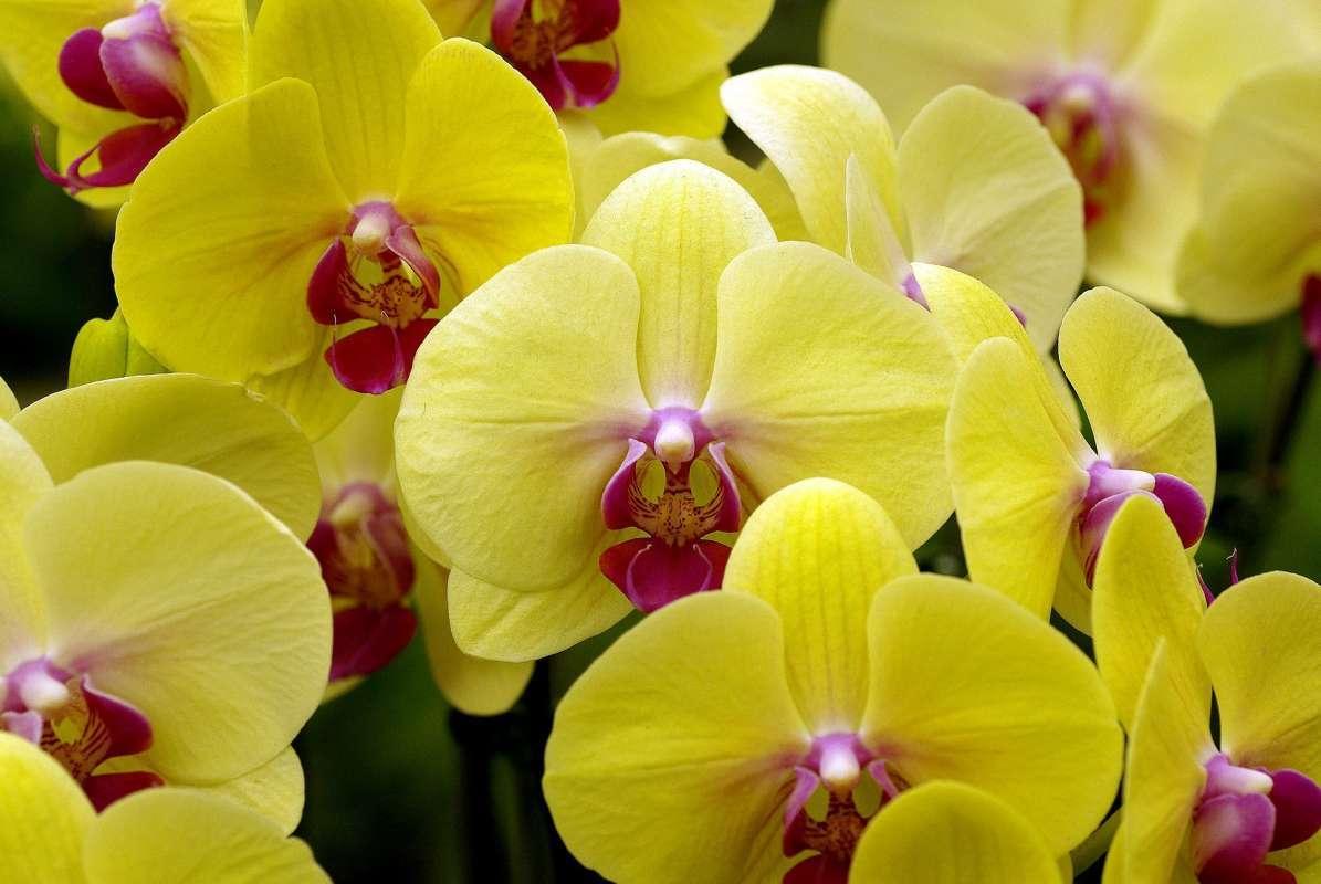 Пятнистые орхидеи: фото и сорта в крапинку, описание разновидности далматинец