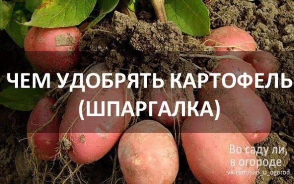 Лучшее удобрение для картофеля при посадке в лунку
