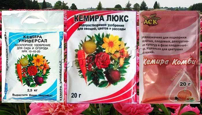 Чем подкормить пионы весной, летом, осенью для пышного цветения
