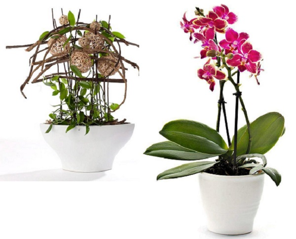 Отвечаем, можно ли пересаживать орхидею зимой