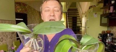 Чесночная вода для орхидей