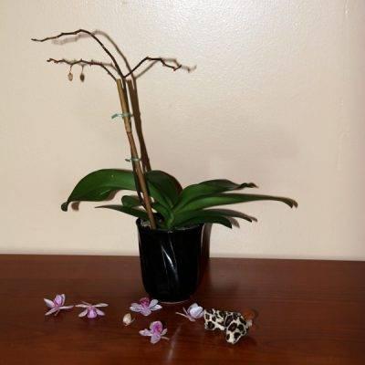 Почему желтеет цветонос у орхидеи и что делать, чтобы остановить этот процесс и предотвратить его в будущем?